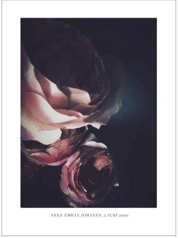 ART PRINT ROSA ROSOR