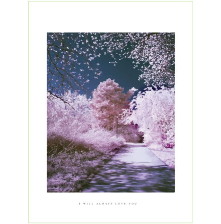 CHERRY WALK ARTPRINT