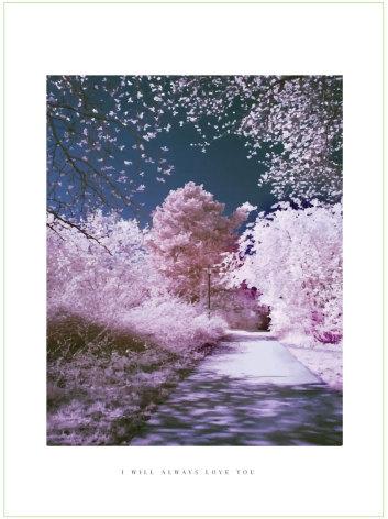 CHERRY WALK ARTPRINT