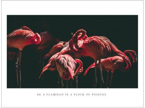 FOTOKONST - FLAMINGOS