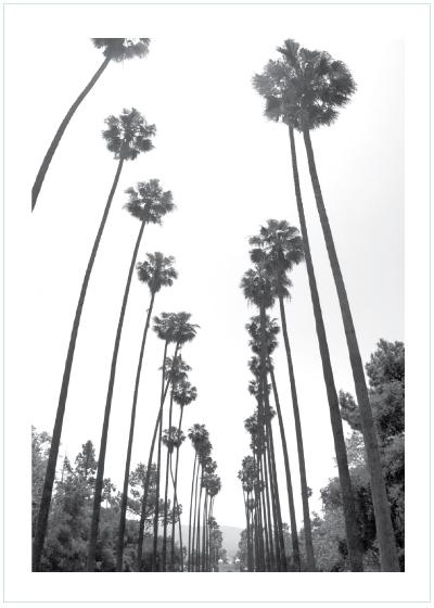 4c3d5a2d poster med palmer, palmposter, palmaffisch, palmavtal, petite charlie,  fotokonst